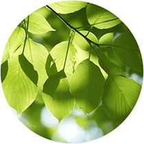 Canopy_Towers_Green_Leaves_Circle_by_Liberty_Development